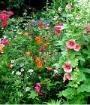 The Cavendish-Stolarskyjs' flower garden