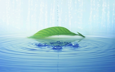 Green leaf on blue water